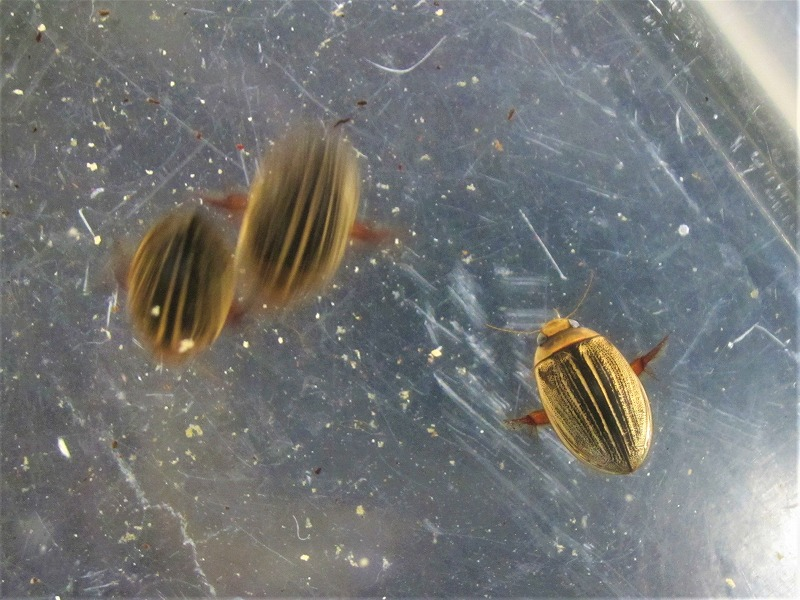 水生昆虫と冷水魚!