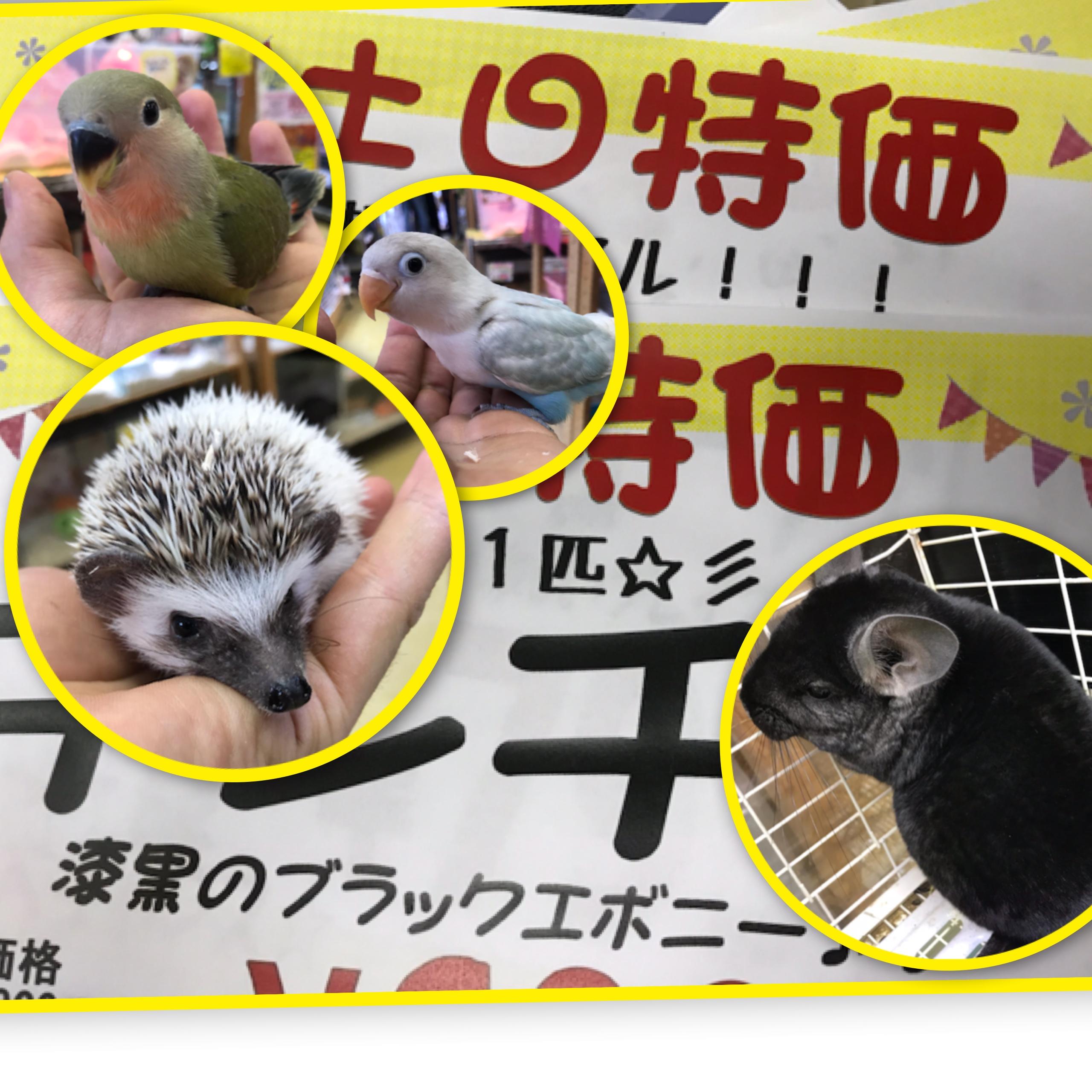 【インター小動物】土日は激アツ運転でしょでしょ!!!