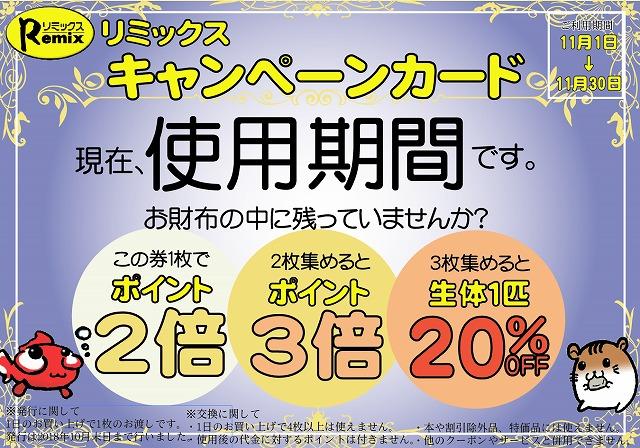 春日井店 海水ブログ 181110
