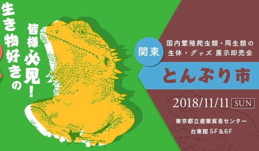 本日パッキングデー!今週末11/11(日)は東京浅草! とんぶり市!