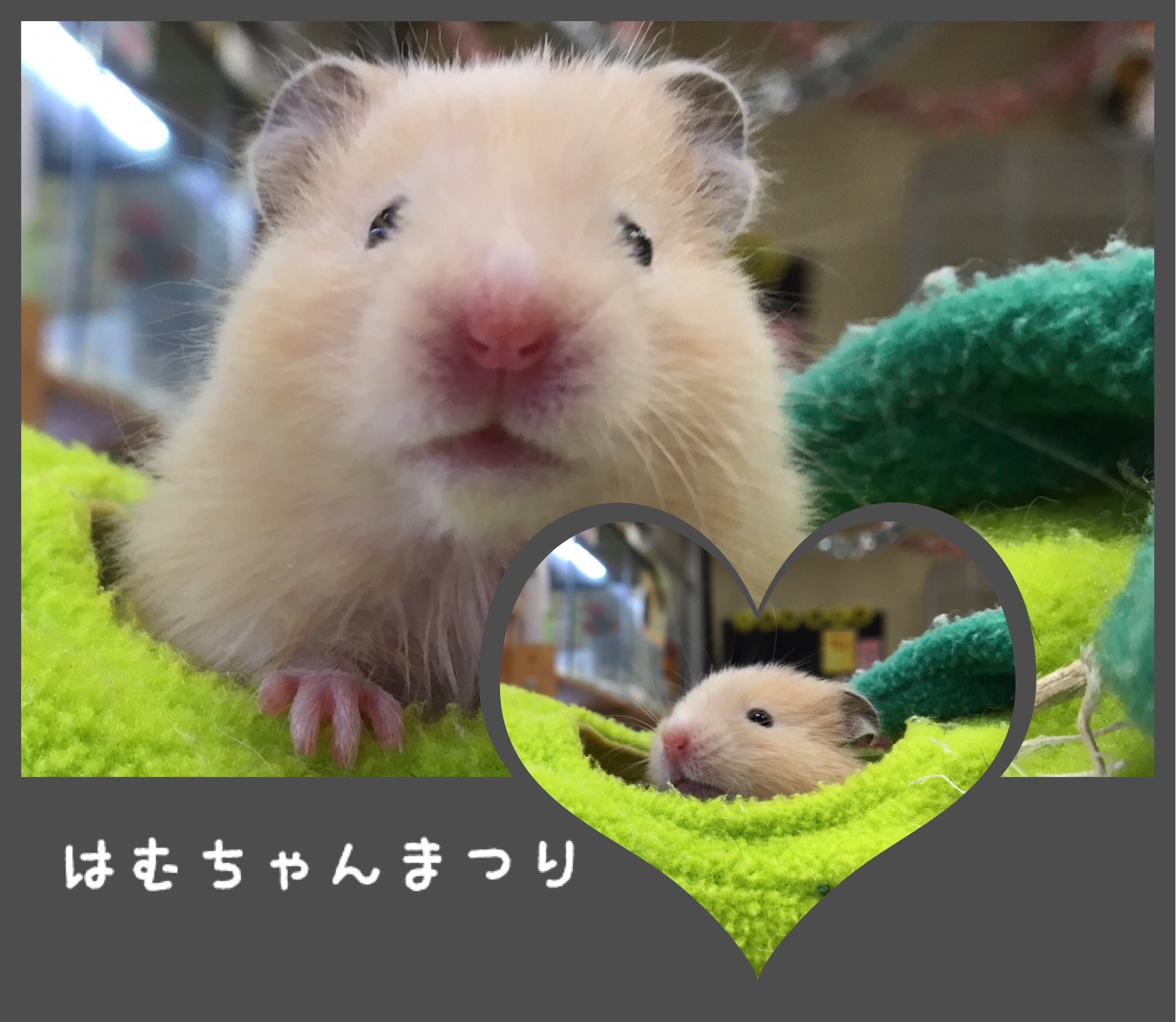 【インター小動物】ハムハム祭り!!
