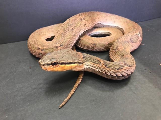 毒蛇擬&ミズヘビなど@インター爬虫類
