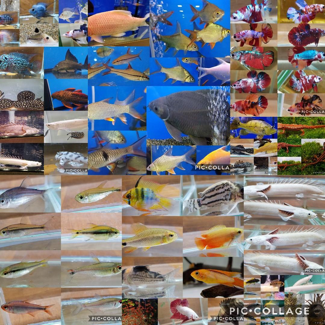 年末のご挨拶 春日井熱帯魚