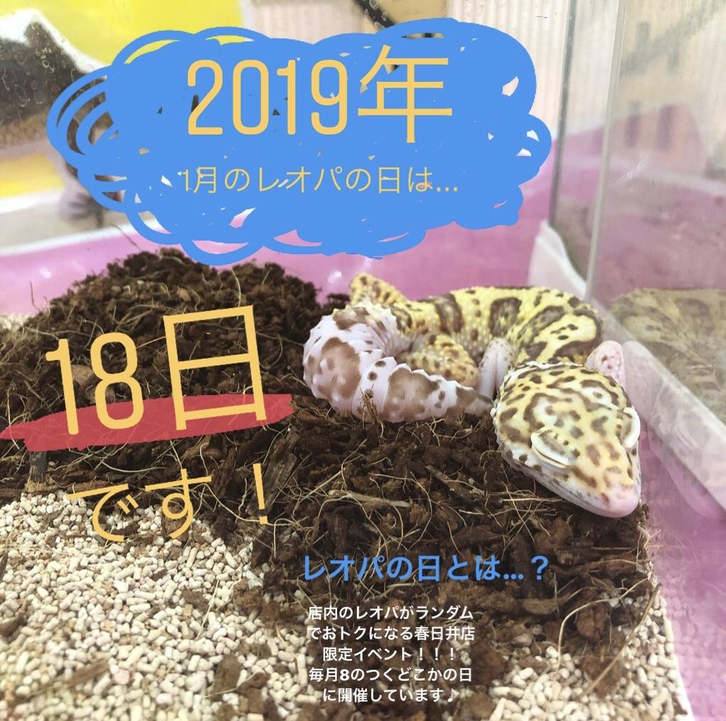 【 春ペポニ 】インコのひな、きています!!