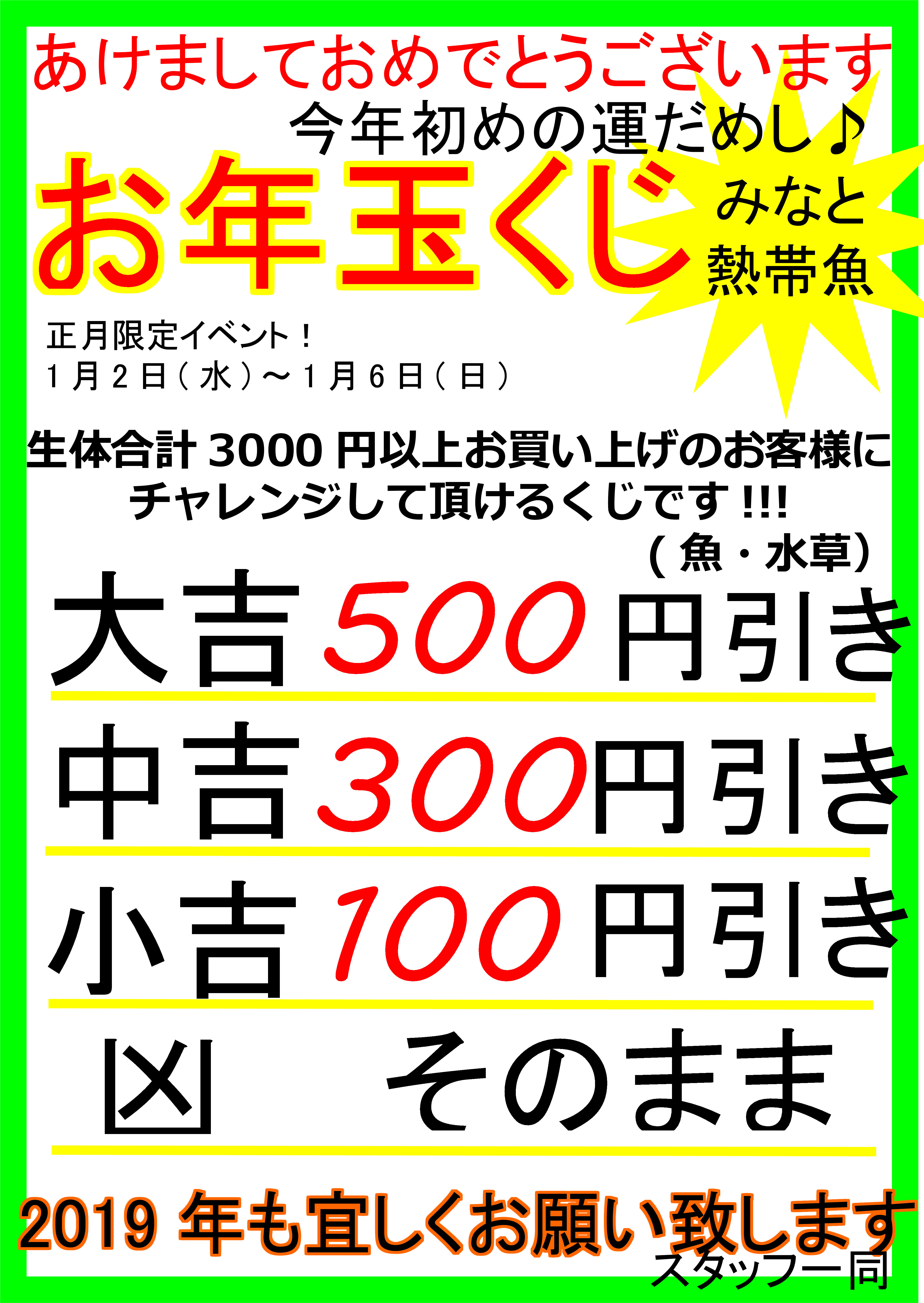 1月5日!!ブラックアロワナベビー本日入荷予定!!