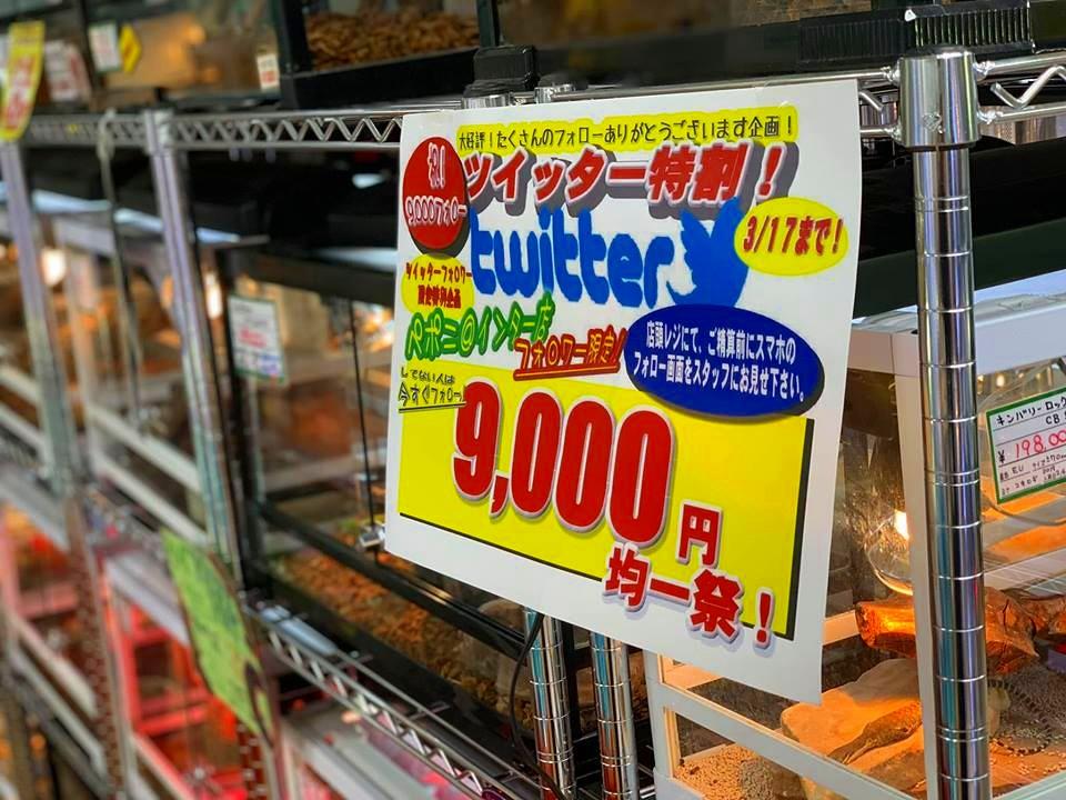 ツイッター特割9,000円均一祭! 本日正午スタート!!