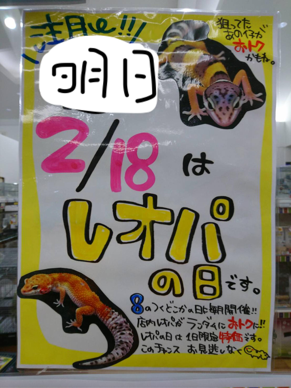 【春ペポニ】レオパの日!!