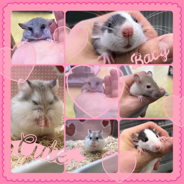【インター小動物】ねずみネズミ鼠~☆彡ねずみーらんどへようこそ☆彡