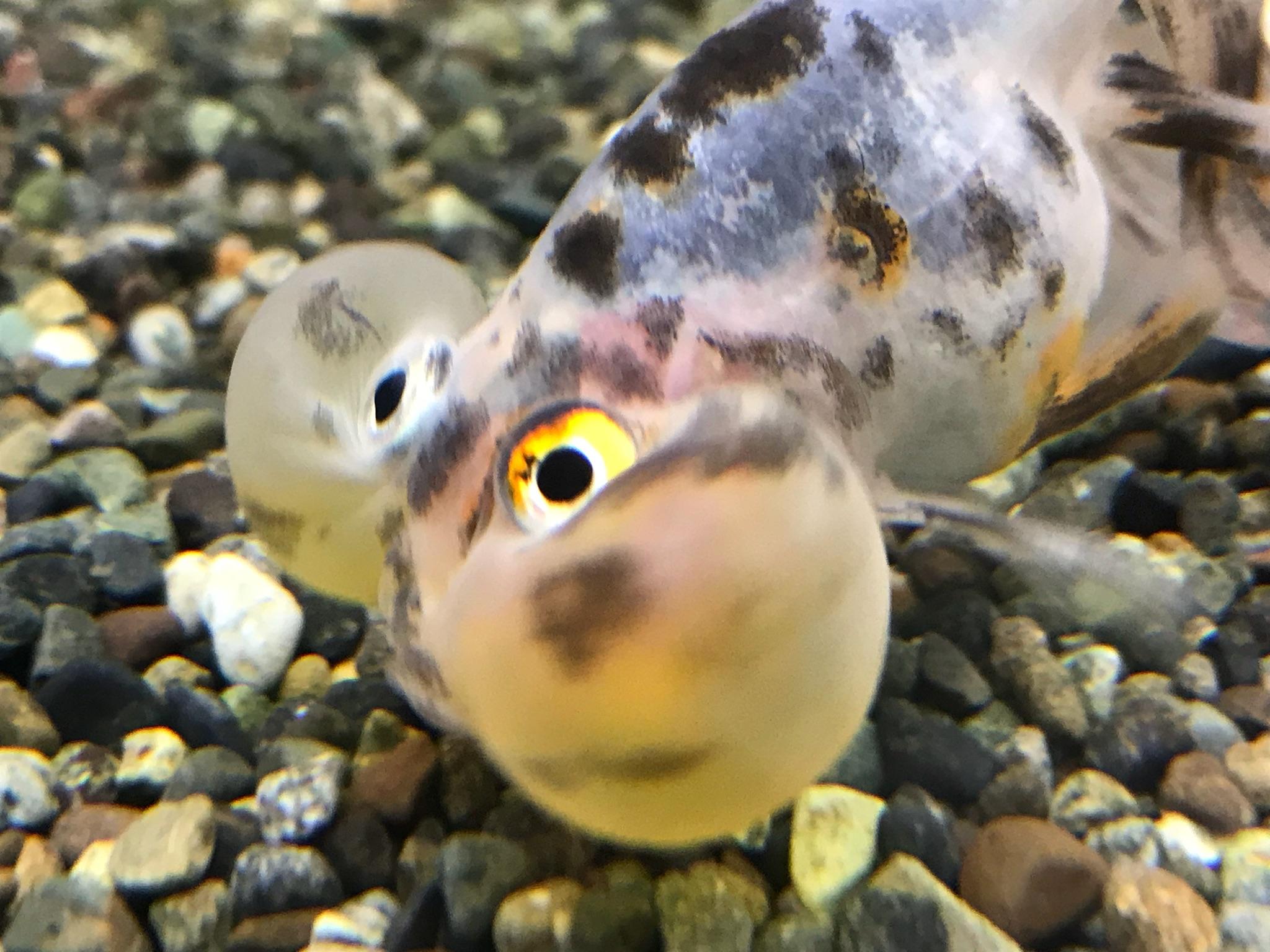 金魚でいっぱい!!