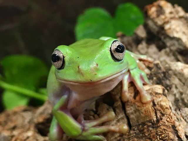 蛙です。@インター爬虫類