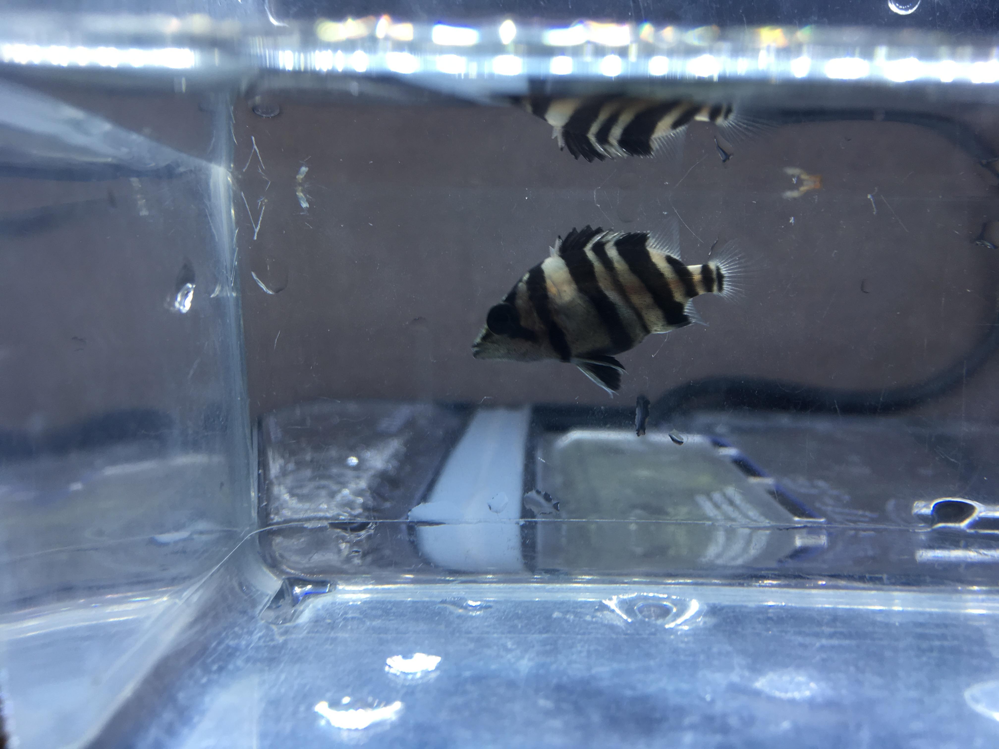 春日井熱帯魚入荷情報