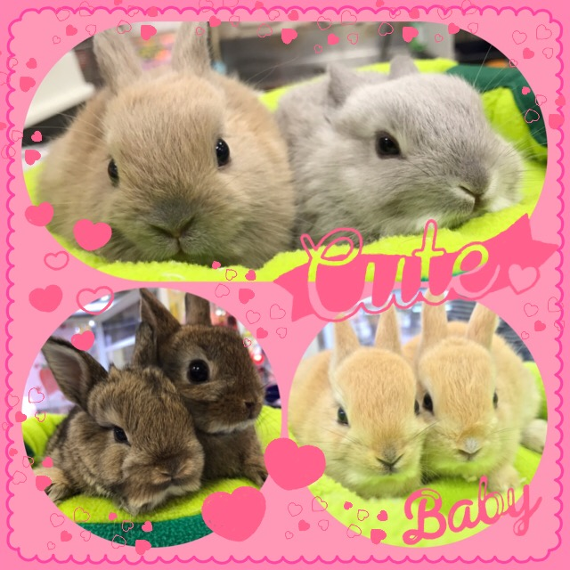 【インター小動物】大量ッ!ミニウサギ~(∩´∀`)∩溢れ出る可愛さです♪