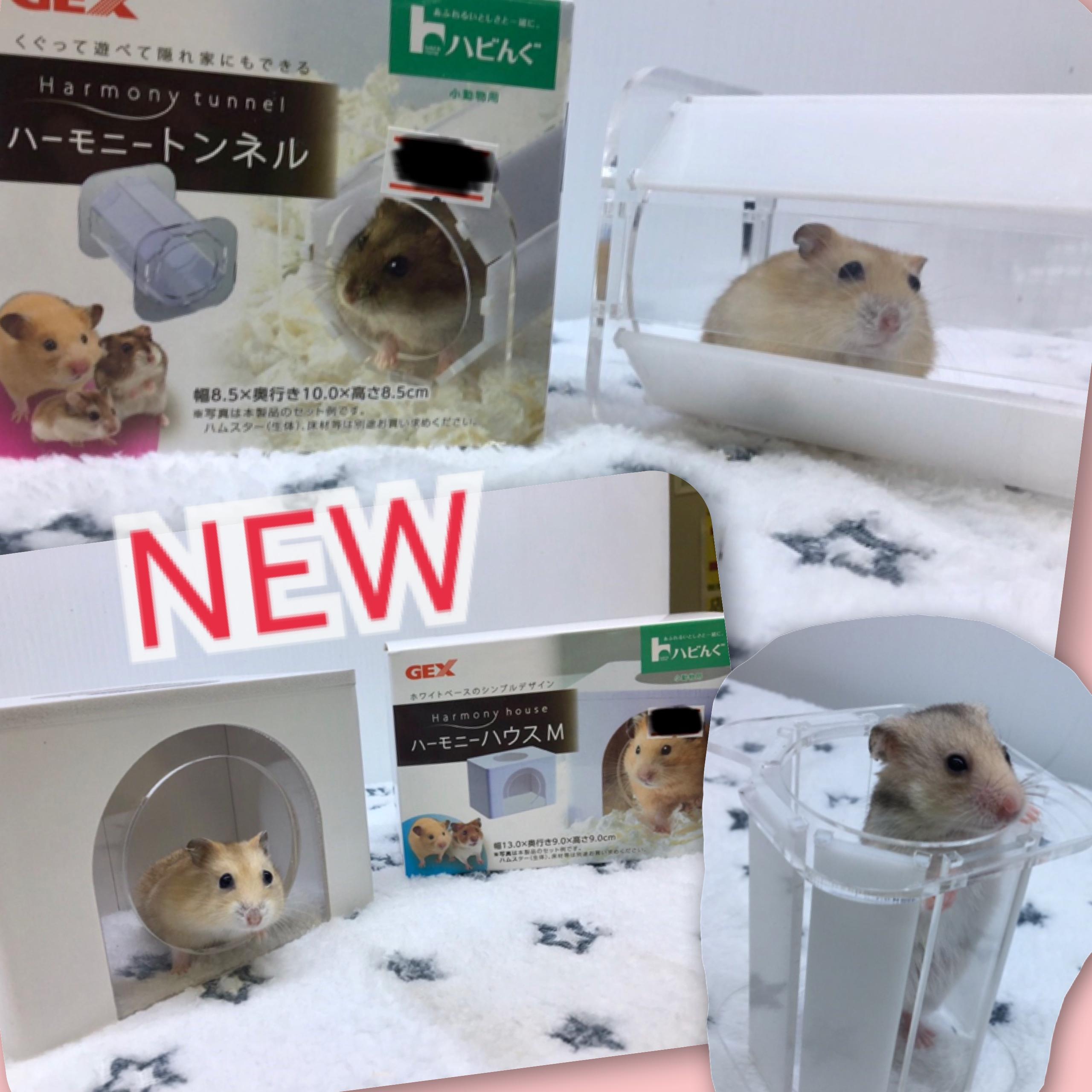 【インター小動物】インター店にも過激な物量の新商品が着弾ッ‼︎‼︎~こだわりの映える写真を添えて~