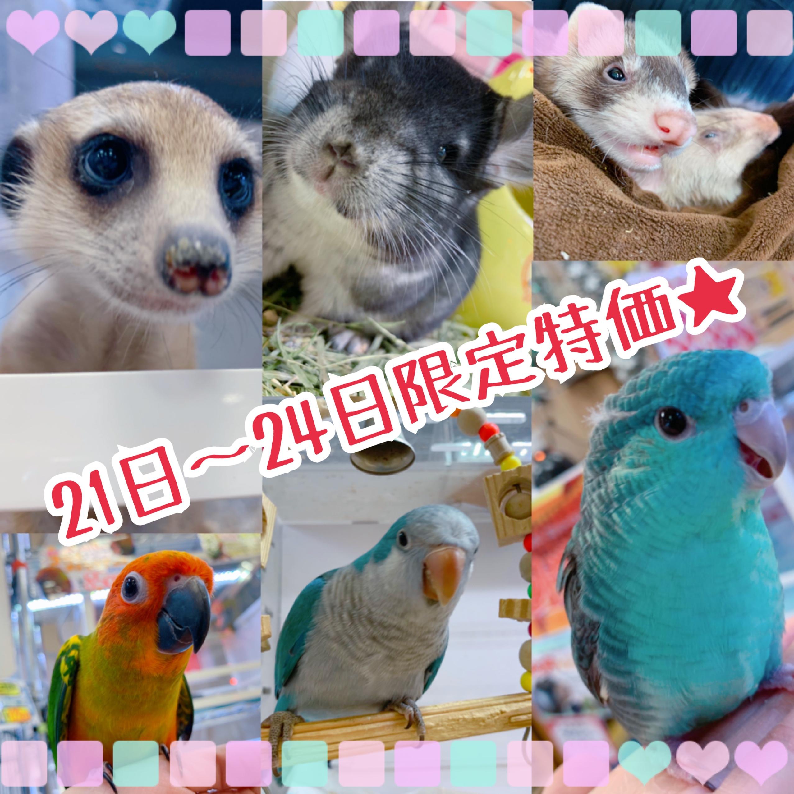 【インター小動物】明日からの4日間!!スペシャル特価開催です☆彡
