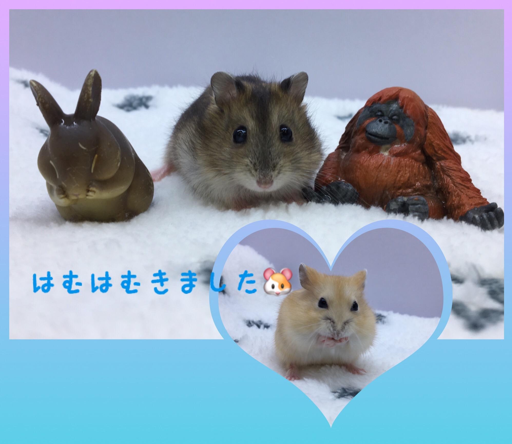 【 インター小動物 】はむちゃん補充完了(・ω・)ゞ