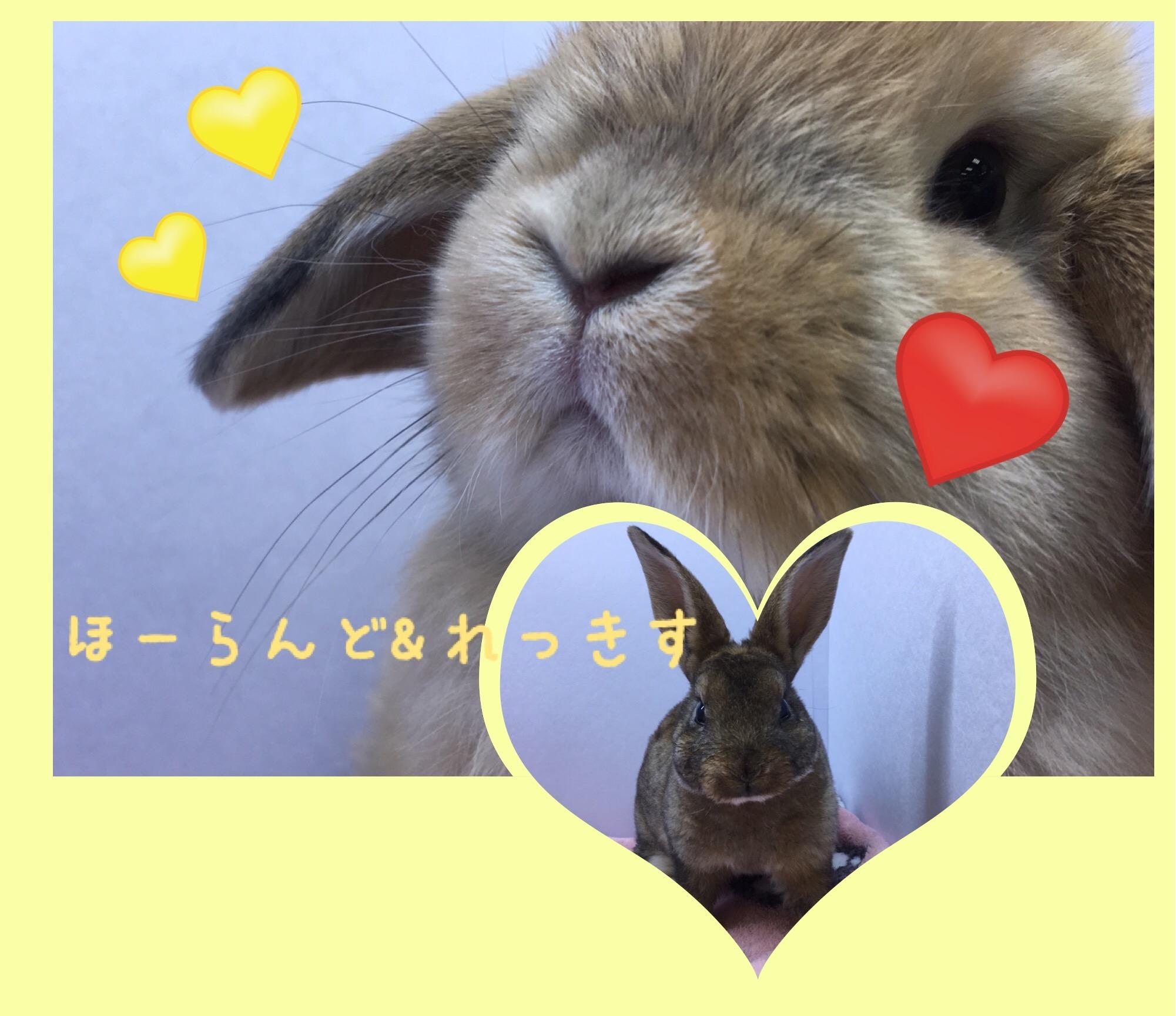 【 インター小動物 】うさ!またきました!!!