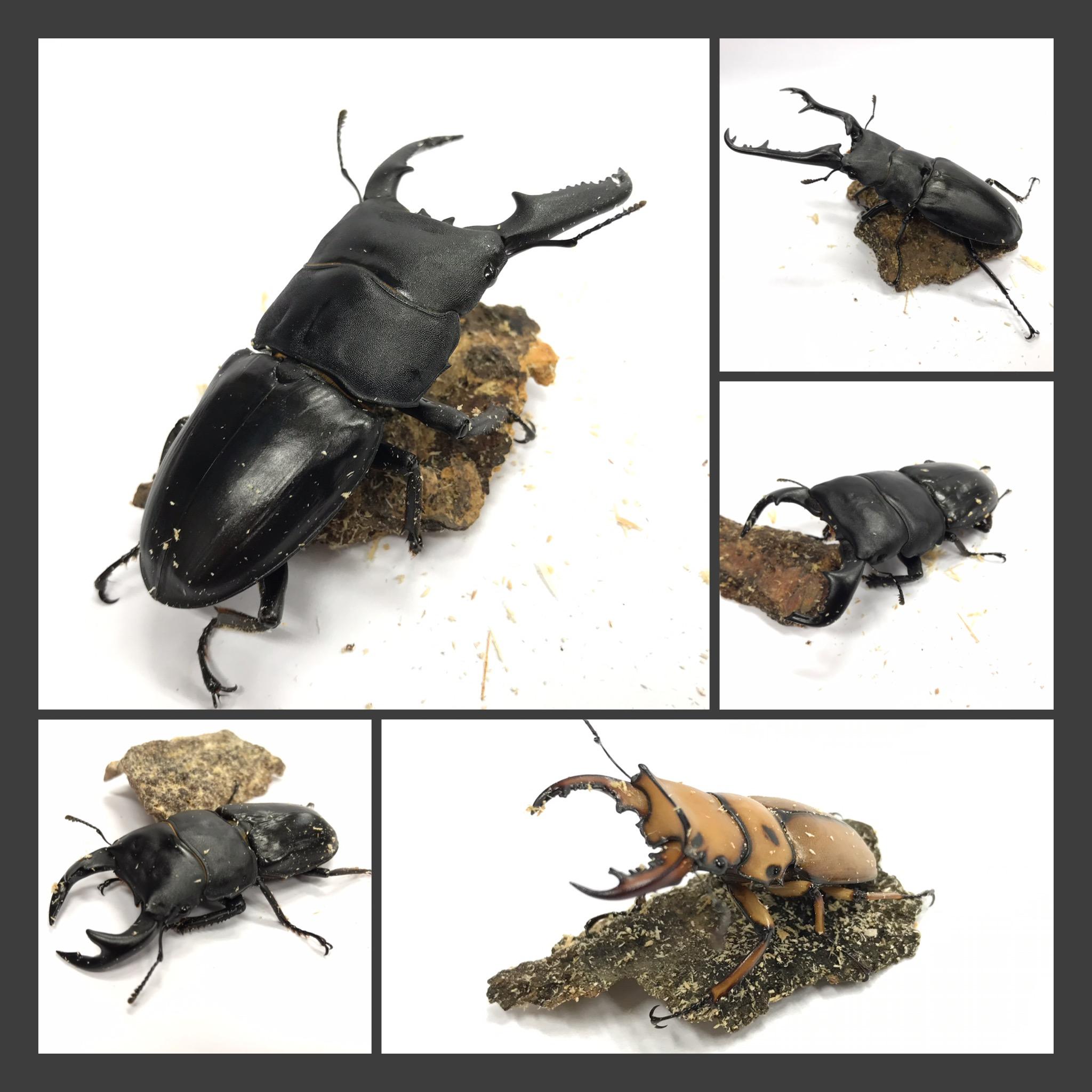 【インター昆虫】さぁさぁ!!そろそろ昆虫の季節でっせ!!