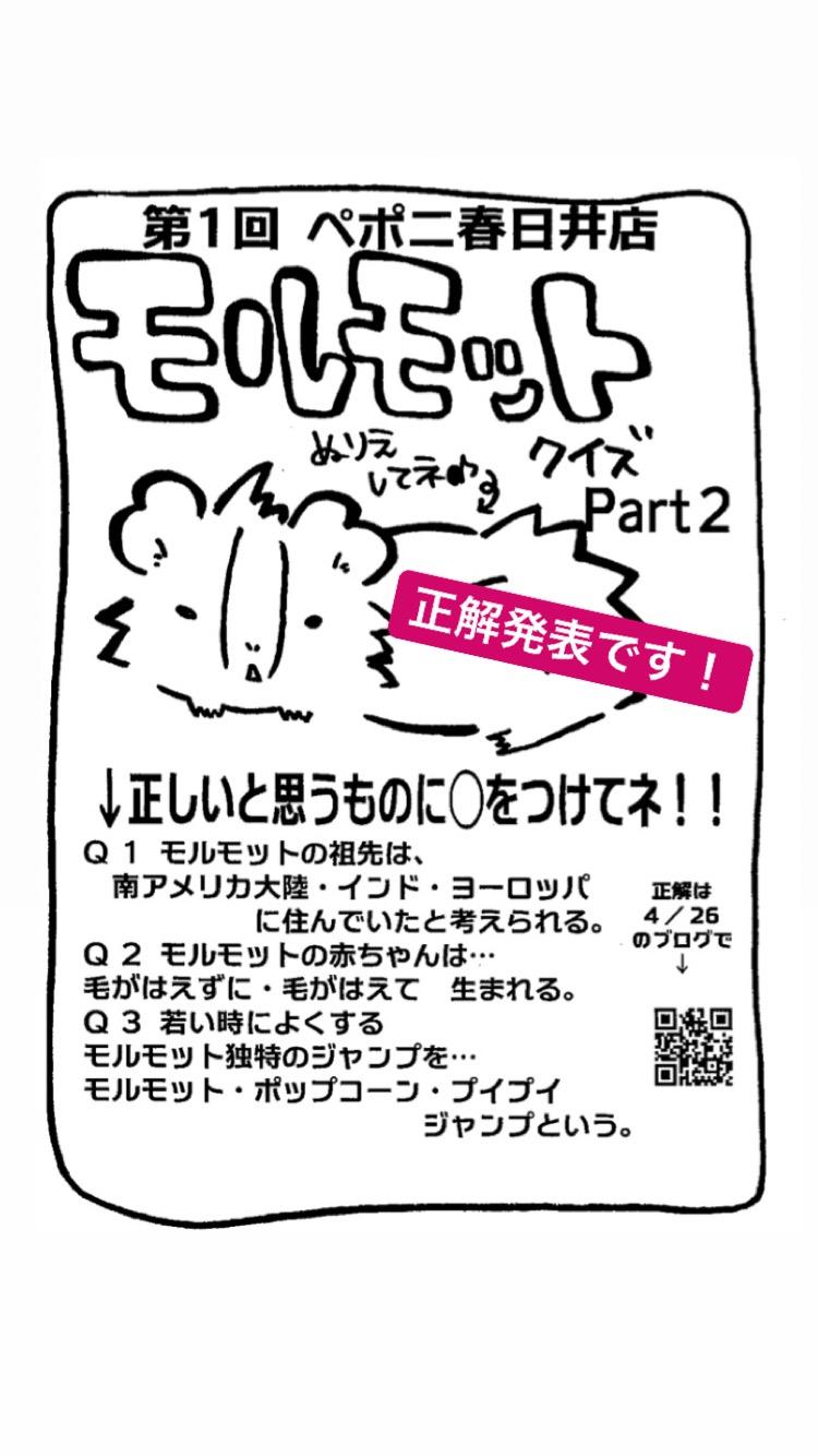 【 春ペポニ 】モルモットクイズ正解発表!part2