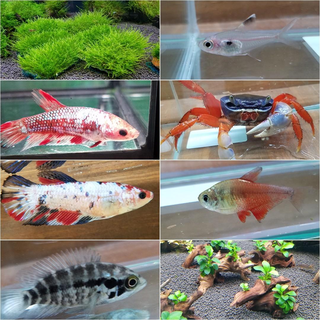 春日井熱帯魚新入荷!