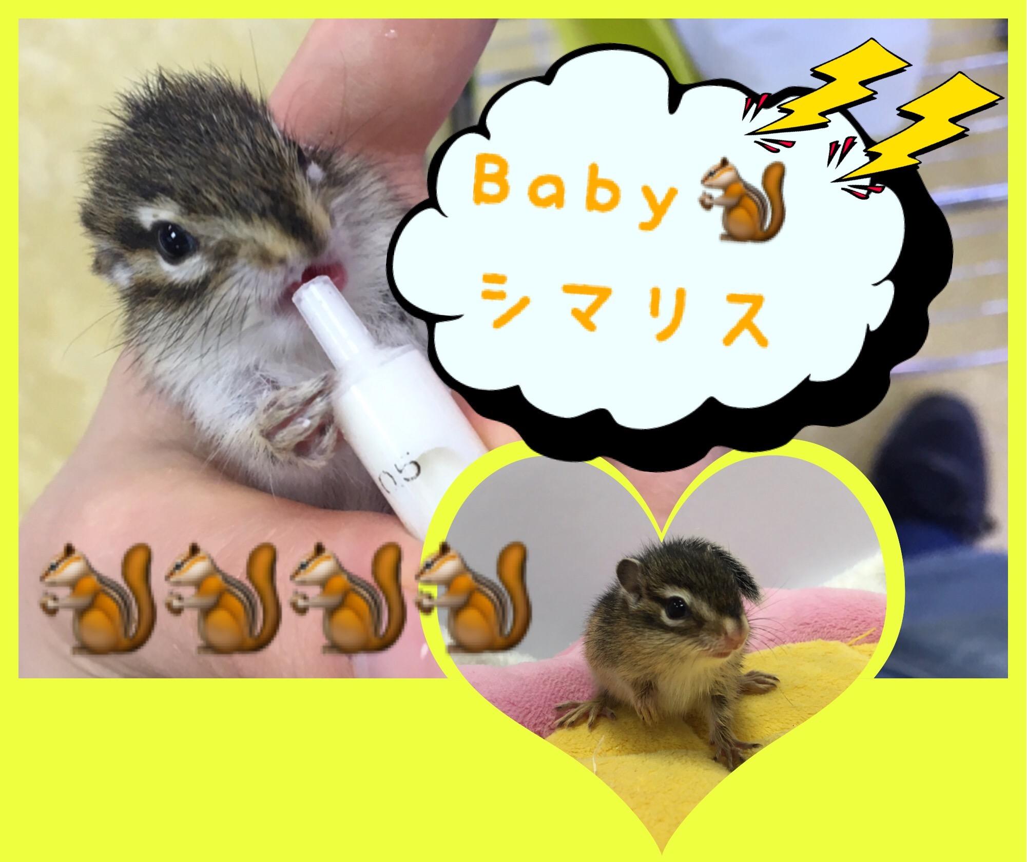 【 インター小動物 】🐿シマリスきました🐿