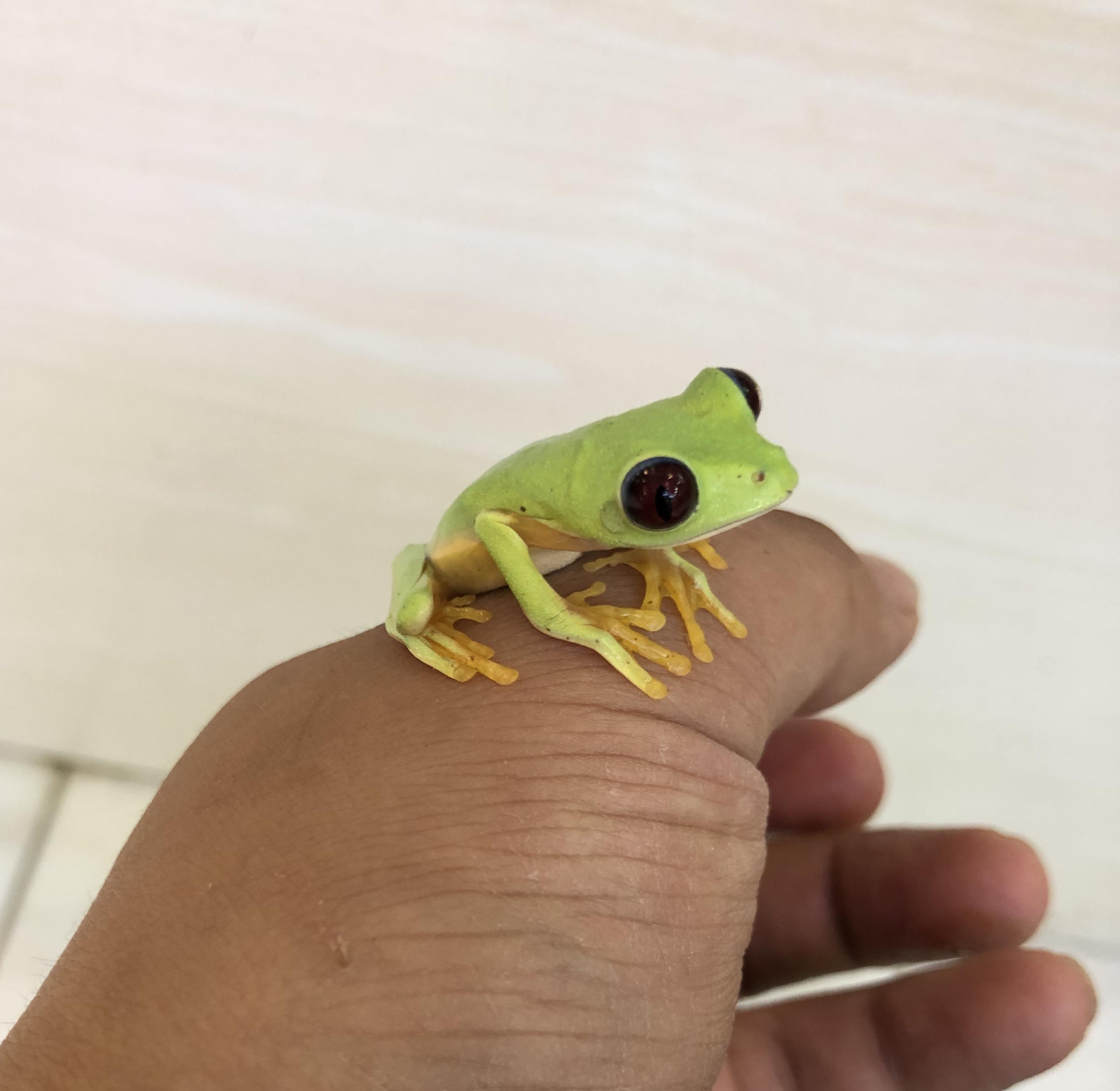 【春ペポニ】蛙ぴょこぴょこ三ぴょこぴょこ