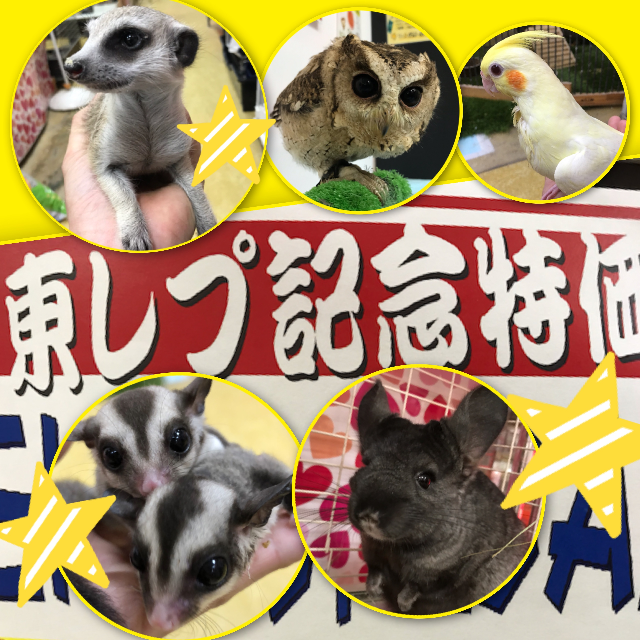 【インター小動物】土日はハッスル!!東レプ記念特価開催でーす☆彡