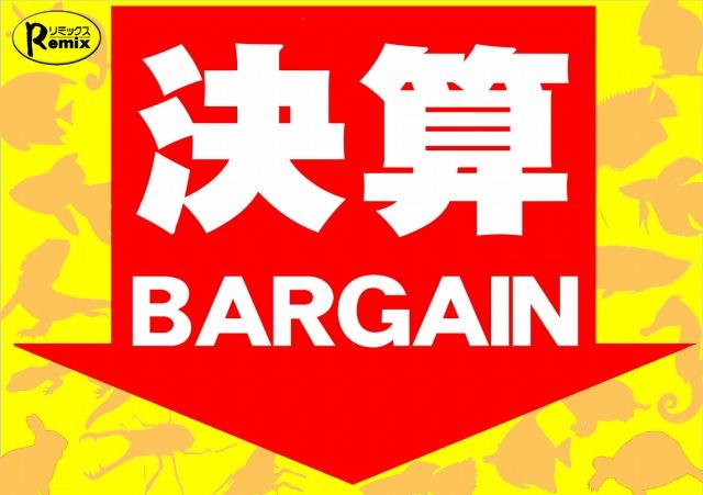 ◇決算バーゲン開幕◇