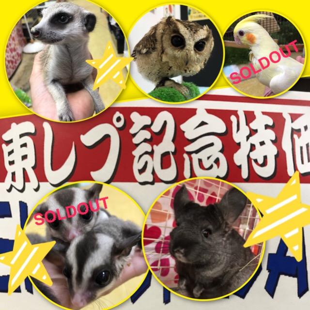 【インター小動物】激アツの東レプ記念特価は日曜日まで!!!