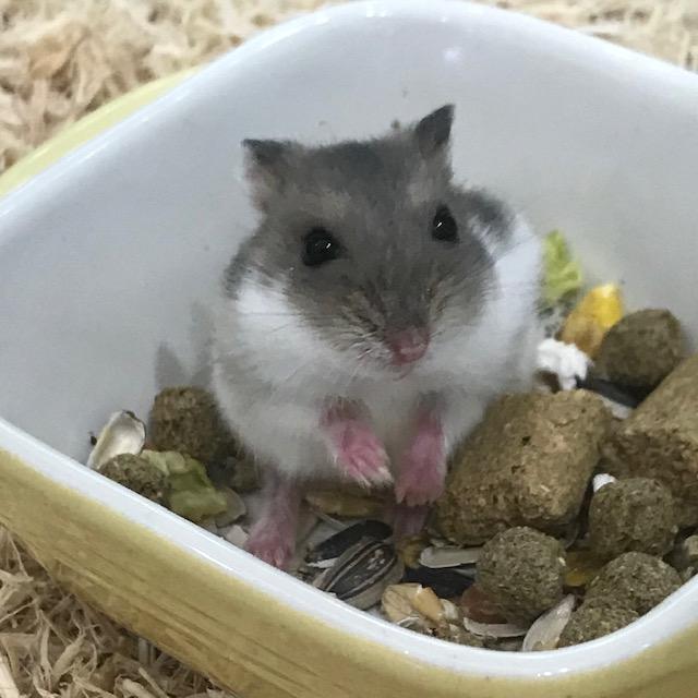 【春ペポニ】小さなネズミたち♪