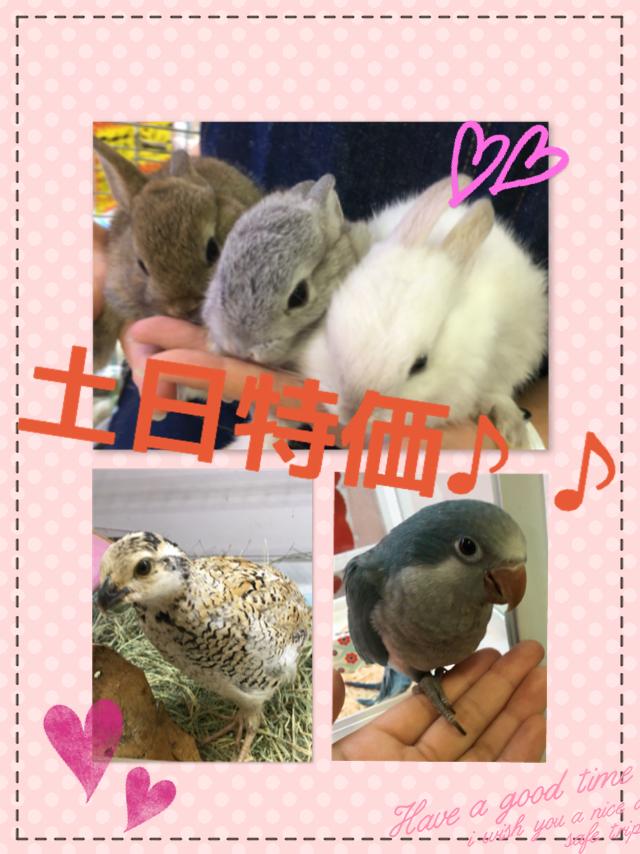 【インター小動物】土日はハッスル6月最後の土日特価はあちぃあちぃ♪