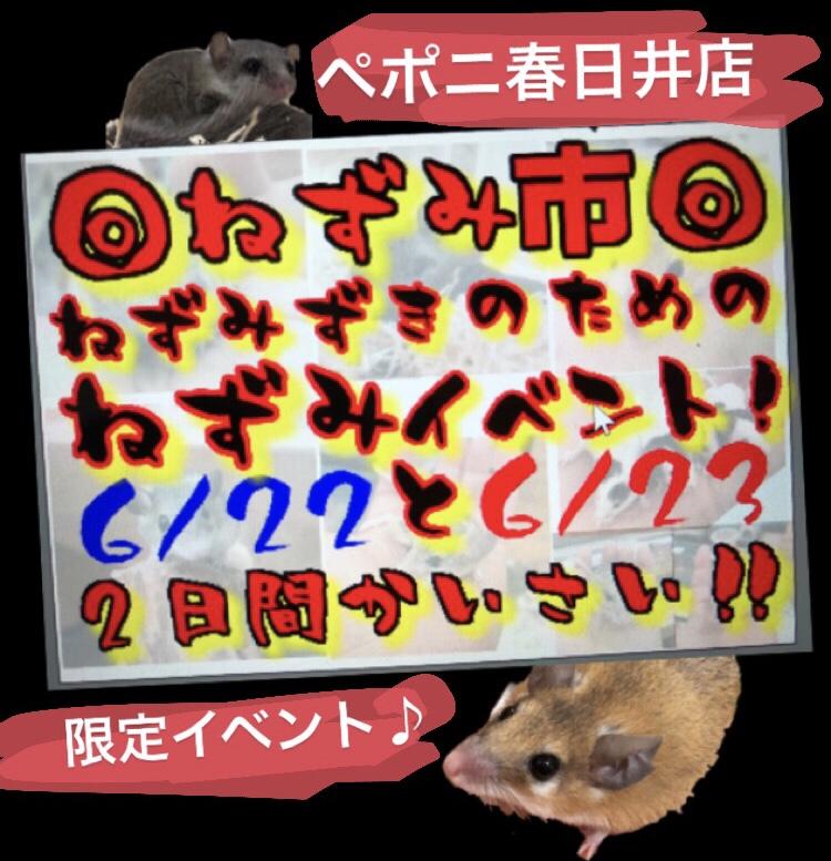 【 春ペポニ 】ねずみがおトクな◎ねずみ市◎開催します!