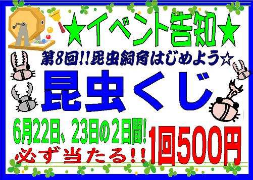 【インター小動物】今週もやります!土日は昆虫クジ!!