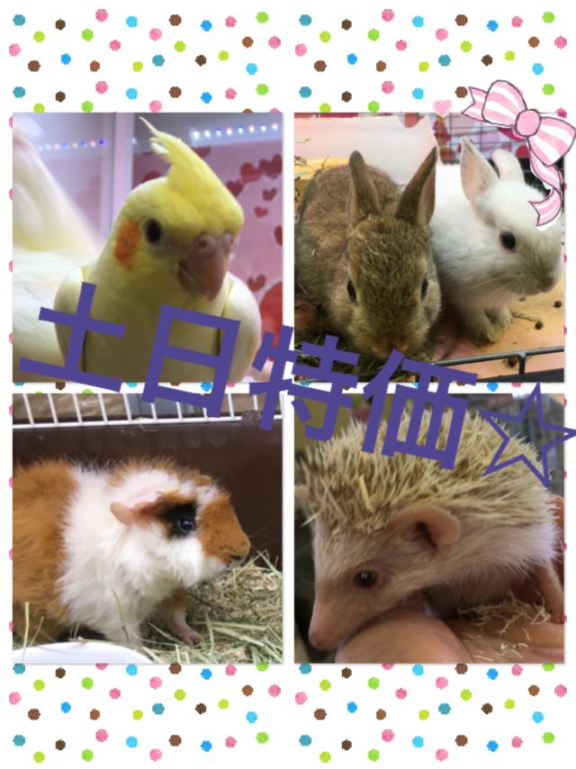 【インター小動物】土日はスーパー特売DAY★お迎えするなら土日でしょ!!
