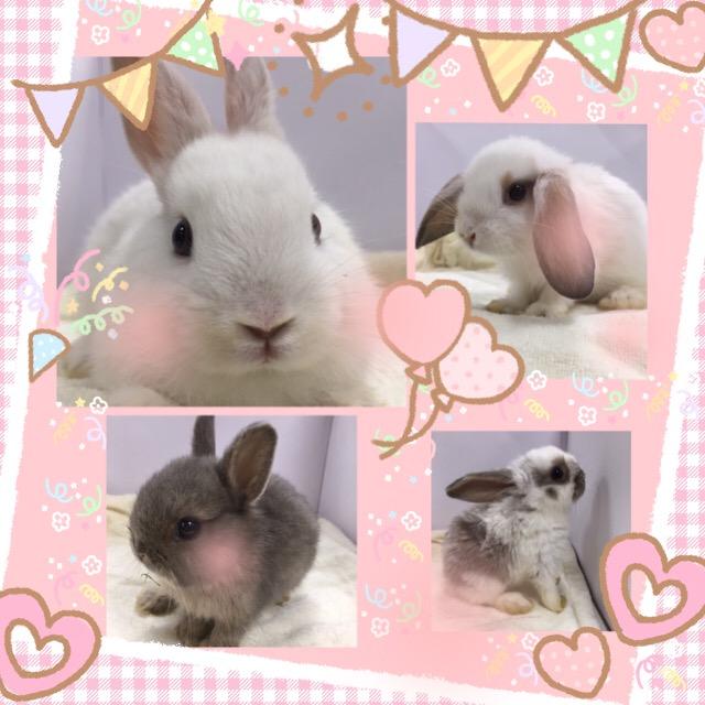 【インター小動物】久々にウサギ潤うインター店!w