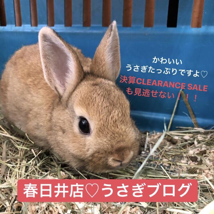 【 春ペポニ 】おトク?!?うさぎブログ♡