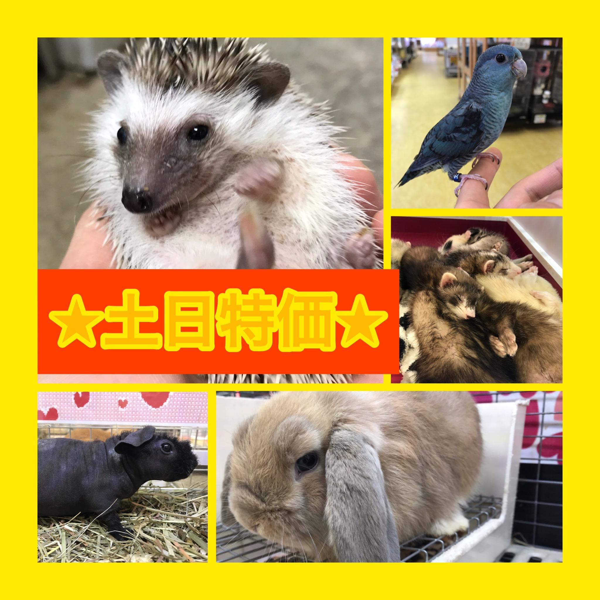 【インター小動物】8月最後の土日特価も激アツですよ〜♪♪