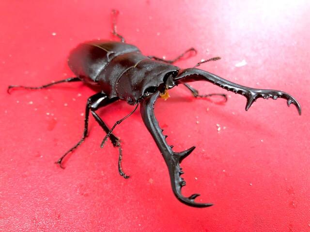 【インター小動物】夏の終わりに昆虫爆入荷!!まだまだシーズン終わりません!!