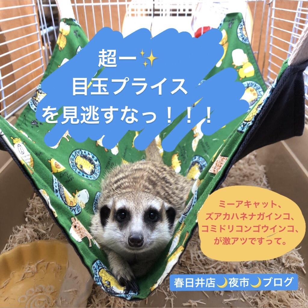 【 春ペポニ 】いよいよ、本日!!!!