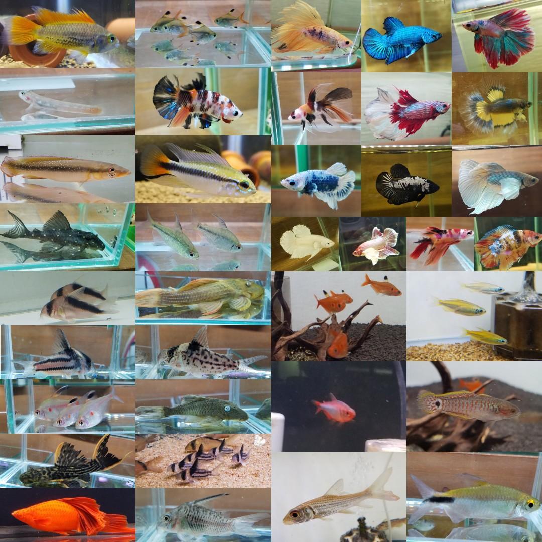 8月31日は夜市開催!春日井熱帯魚