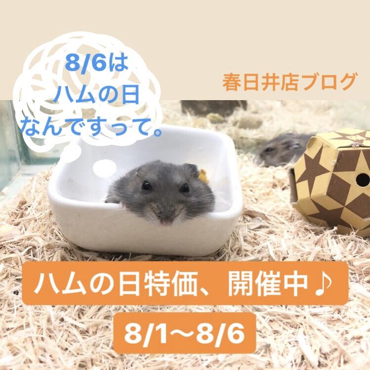 【 春ペポニ 】ハムの日特価、開催中ー!( 8/1〜8/6 )