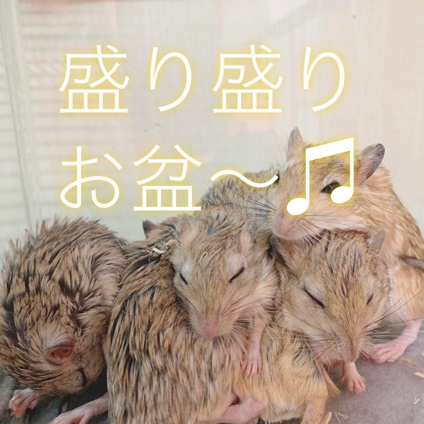 【春ペポニ】お盆特売で盛々!