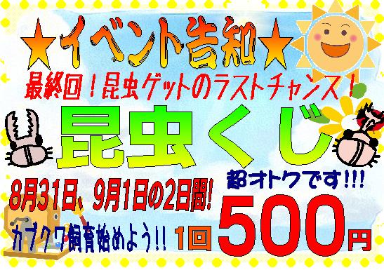 【インター小動物】昆虫クジいよいよ最終回!!