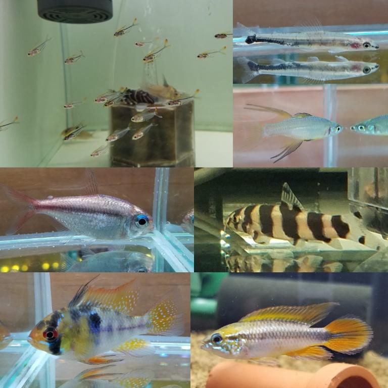 熱帯魚の新入荷 春日井熱帯魚