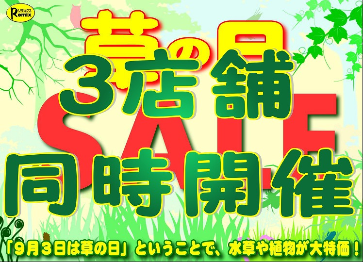 """""""9/3(火)~""""草の日開幕!""""~9/8(日)"""""""