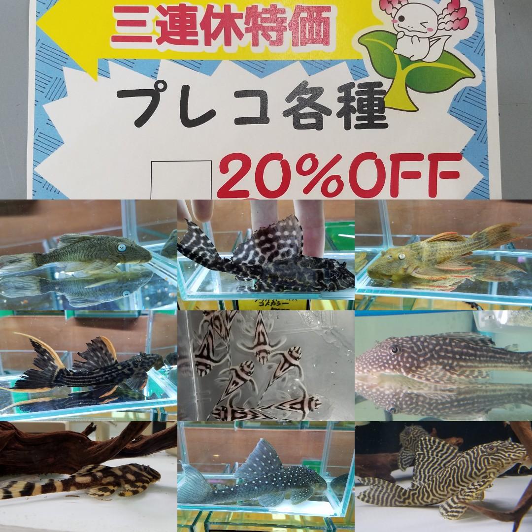 三連休特価!春日井熱帯魚