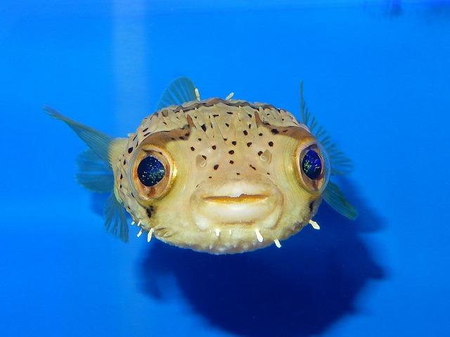海水魚っぽいのいっぱい^^