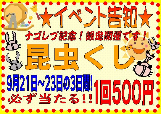 【インター小動物】☆3連休は昆虫クジ開催中!!☆かわいい虫来てます