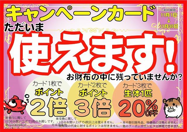明日は月末朝市&キャンペーンカード使用期間最終日!