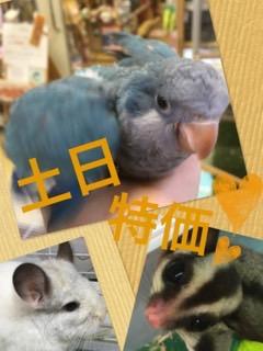 【インター小動物】土日特価です!!盛り上がっていきましょう♪♪