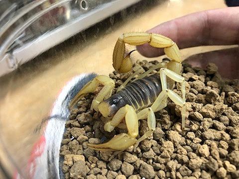 奇蟲もいっぱい来てます!!@インター爬虫類